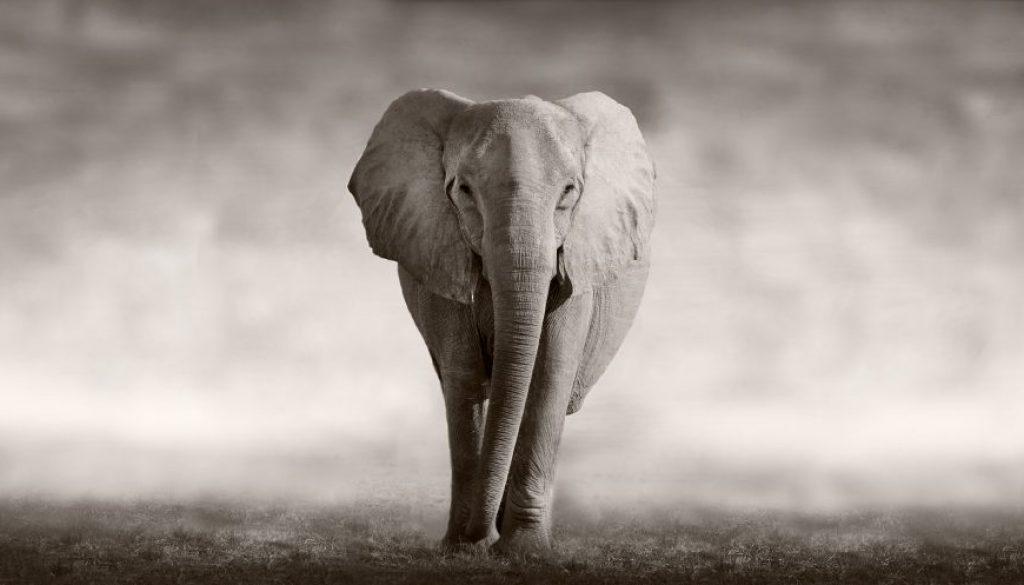 sales enablement elephant
